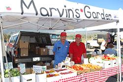 Marvins-Garden