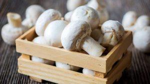 button-mushrooms