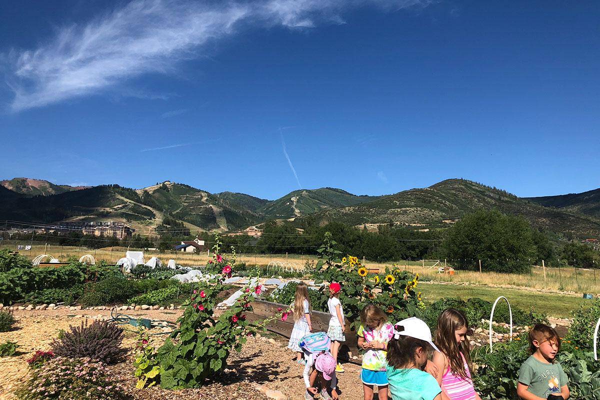 Harvest Camp