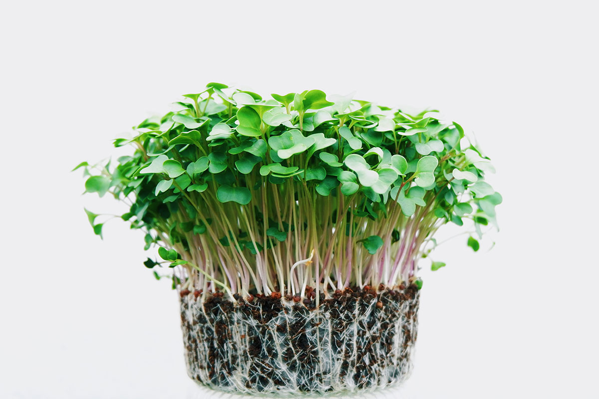 Microgreens with Macro Benefits