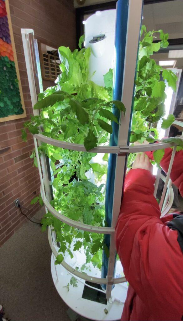 Tower Garden Sustainability